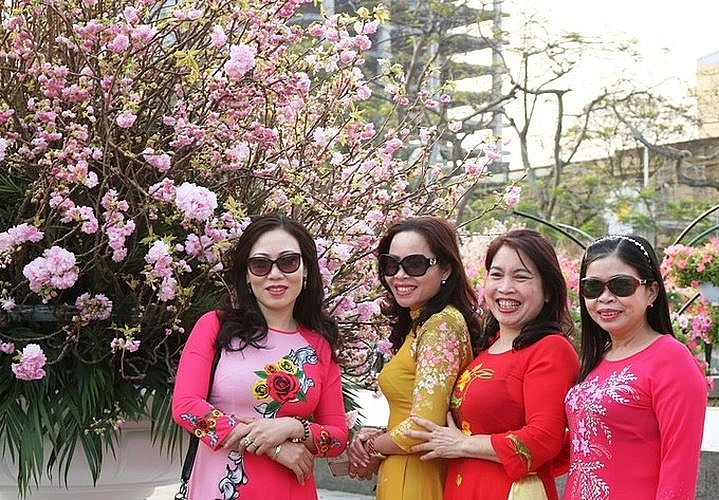 haiphong city graced with nearly 1000 japanese sakura