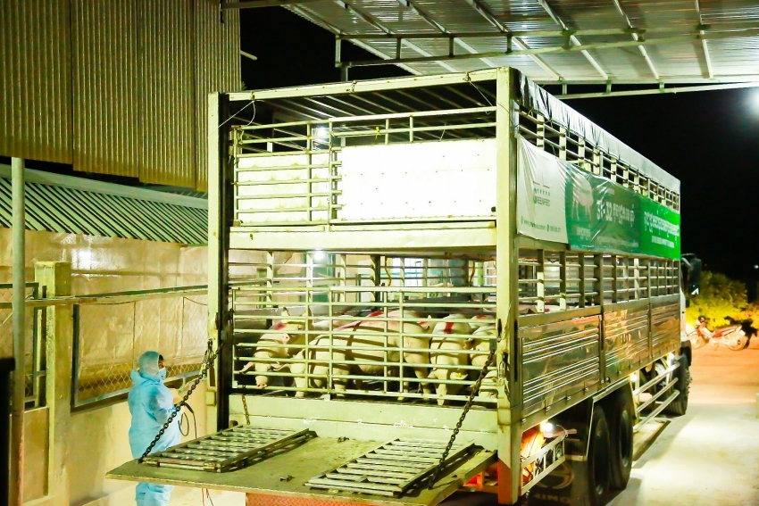 greenfeed vietnam exports high quality breeding stock