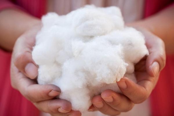 cotton usa to celebrate cotton day 2019 in vietnam