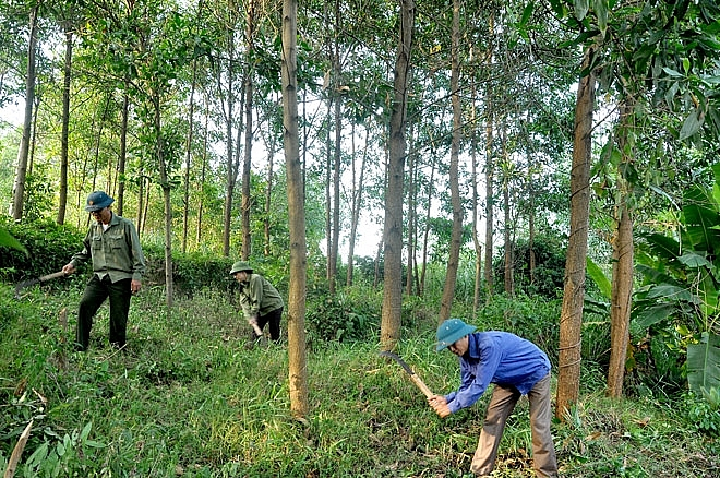 phu yen establishes high tech forestry co operative