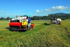 Mekong Delta urges more high-tech farming investment