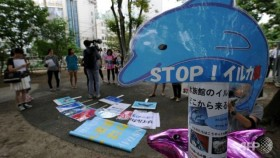 Japan investigating dolphin escape in slaughter town
