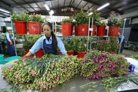Da Lat to open flower trading centre