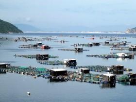 Phu Yen pours VND2.12 trillion into aquaculture