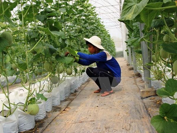 tay ninh works towards organic farming