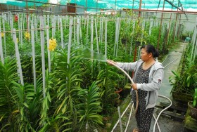 Vĩnh Long's high-tech agriculture pays off