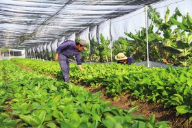 Agriculture revival  with private funds