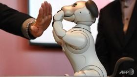 old dog new tricks sony unleashes intelligent robot pet