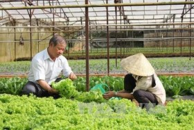 vietnam plans 500 hi tech agricultural cooperatives by 2020
