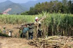 Association proposes stopping temporary import of sugar