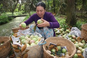 tien giang asks for enhanced protection for star apples brand exported to us