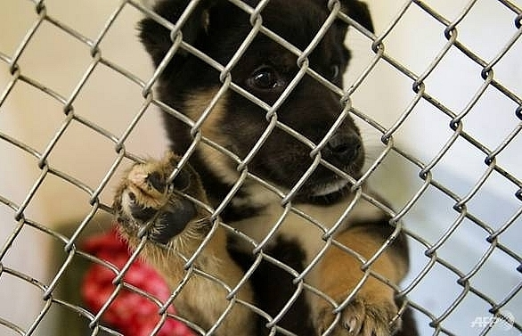 top south korean animal rights group slammed for destroying dogs