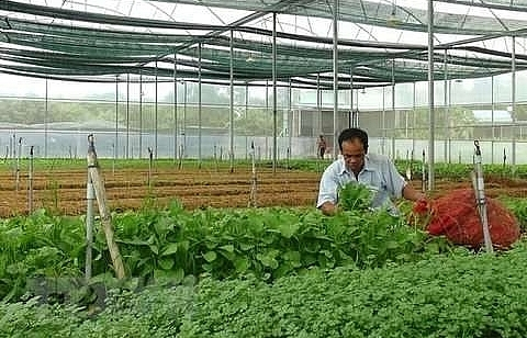 vietnam targets to attract 100000 businesses in agriculture