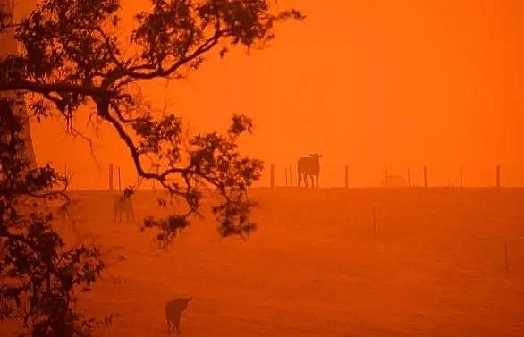 nearly us 17m raised as australia reels from bushfire fury