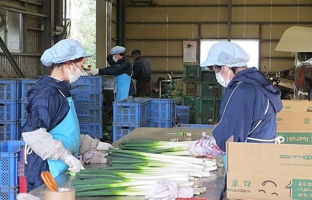 japans ibaraki prefecture needs more vietnamese trainees