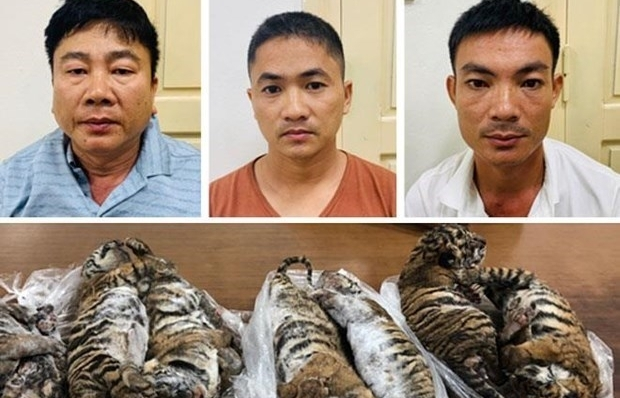 man receives six year jail term for transnational wildlife trading