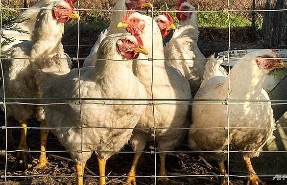czechs detect bird flu as new europe outbreak feared