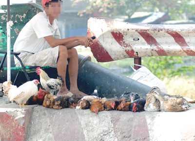 16 provinces in Vietnam report bird flu