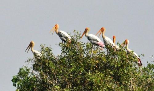 Entering the giant 'bird nest' in Vietnam's Mekong Delta