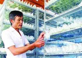Hi-tech farmers in Da Lat