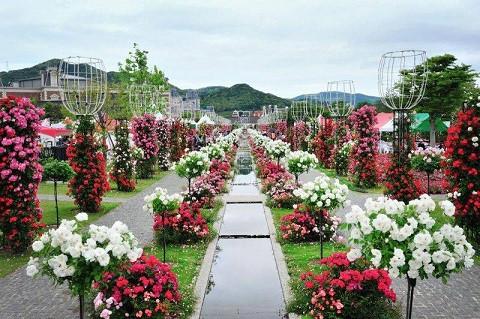 first bulgarian rose festival in hanoi to open mar 3