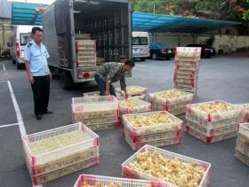 Border areas on alert for bird flu
