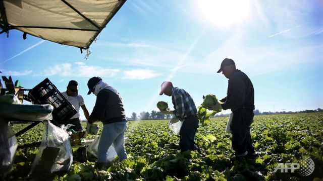 Trump immigration policies have farming industry on edge