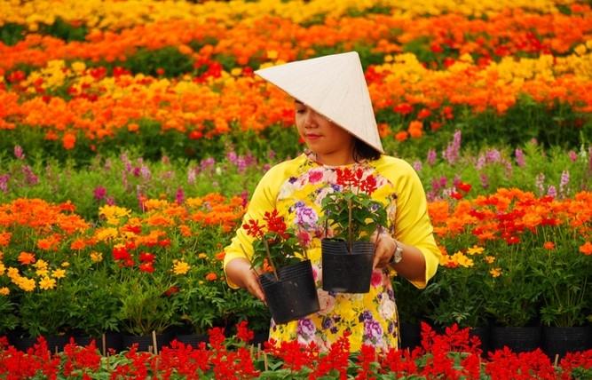 sa dec flower village drawing crowds as tet nears