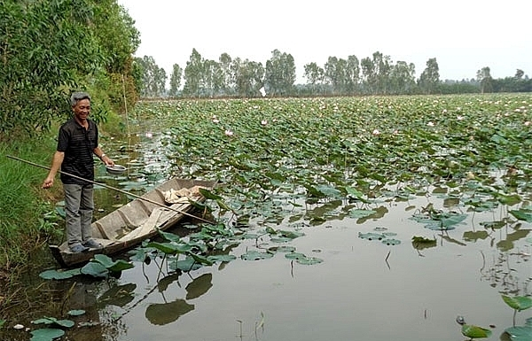lotus farm tourism model faces market hurdles in mekong