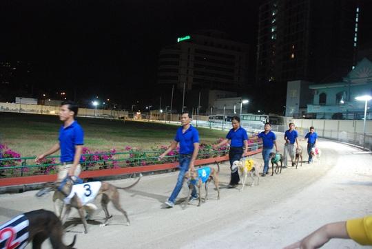 dog races in vung tau city