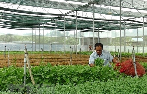quang tri lures vnd160 billion in hi tech agriculture