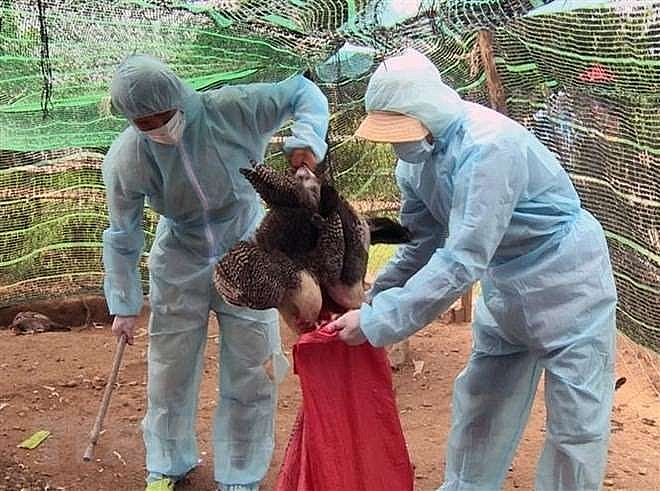 plan seeks to minimise social economic impact of bird flu