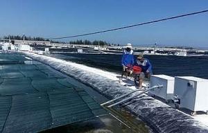 central province debuts nano tech shrimp farms
