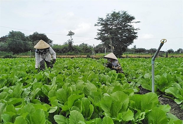 tien giang invests 650000 usd in irrigation projects along coastal districts