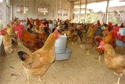 foreign animal feed makers face tough punishment