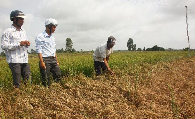 drought salinity threaten millions of farmers in vietnams mekong delta