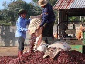 10 countries agree to protect Dak Lak coffee brand