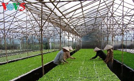 Ha Nam develops smart agriculture   Province, Investor, call