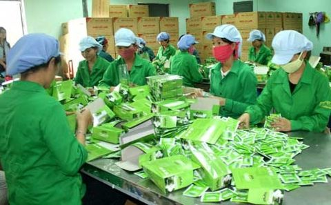 Vietnamese tea firms eye US market