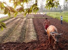 Farmers hail land tax waiver