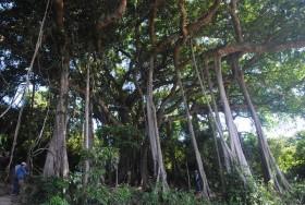 Sơn Trà master plan needs amending