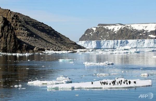 15 million penguins discovered on remote antarctic islands