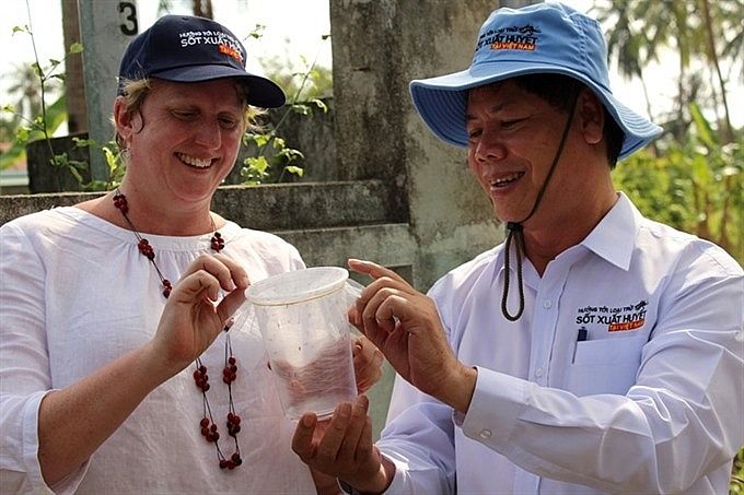 anti dengue mosquitoes released in mainland vn for the first time