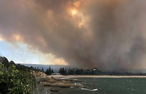 australia bushfires destroy homes kill cattle
