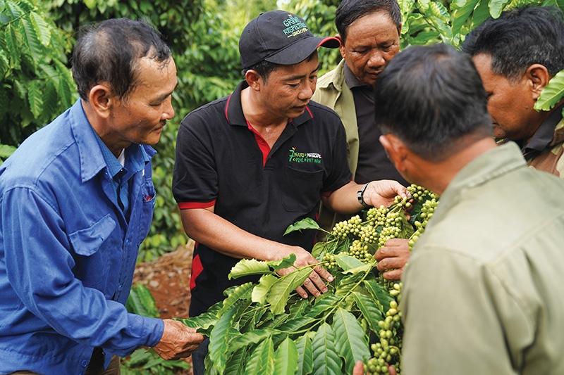 nestle vietnam introducing premium quality vietnamese coffee to the world