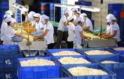 farmers predict poor cashew harvest