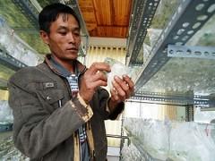 high tech farming in dalat