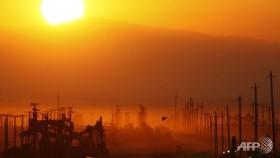 World oil market 'close to balance' despite OPEC cuts: IEA