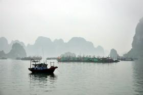 Decree sets higher fines for aquatic products violations