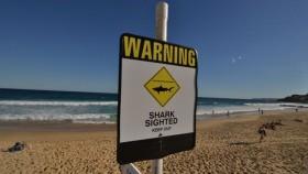 Family see shark kill teenage daughter off Australia